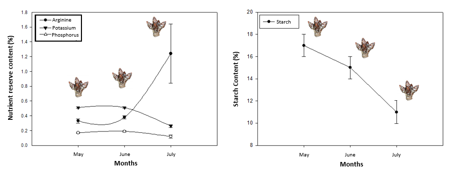 Dynamics of arginine, potassium, phosphorus and starch in cherry buds